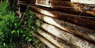 дефекты домов из бревен