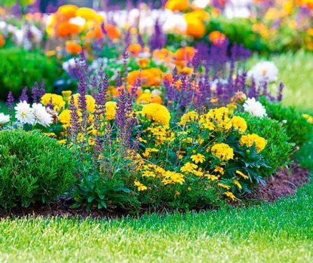 Способы создания цветника